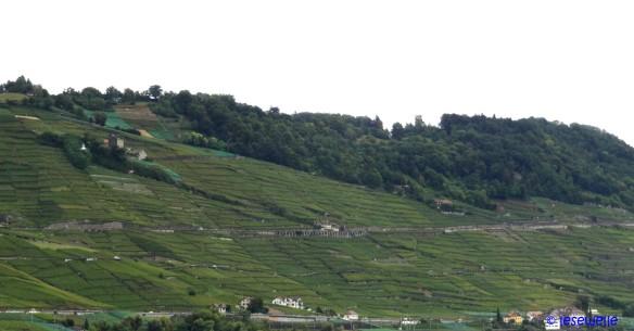 Lavaux